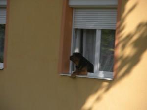 A kutyát is érdekelte